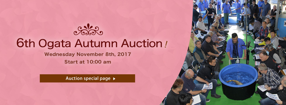 6th Ogata Autumn Auction
