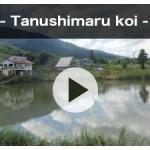 tanushimaru